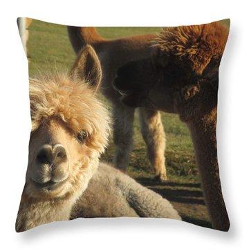 Moonacre Alpacas 2 Throw Pillow