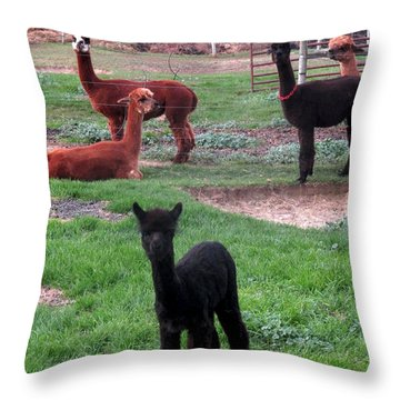 Moonacre Alpacas 3 Throw Pillow