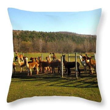 Moonacre Alpacas 10 Throw Pillow