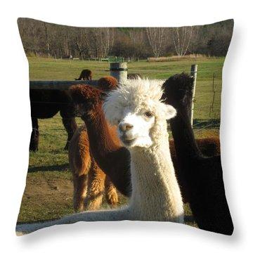 Moonacre Alpacas 11 Throw Pillow