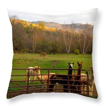 Moonacre Alpacas 6 Throw Pillow