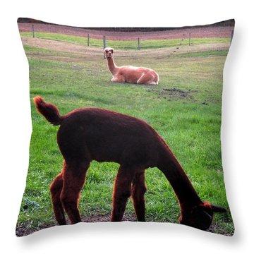 Moonacre Alpacas 7 Throw Pillow