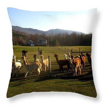 Moonacre Alpacas 8 Throw Pillow