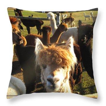 Moonacre Alpacas 9 Throw Pillow