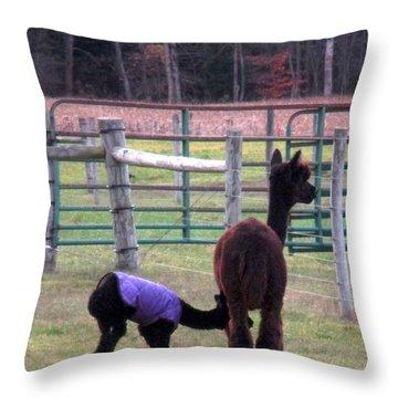 Moonacre Alpacas 4 Throw Pillow