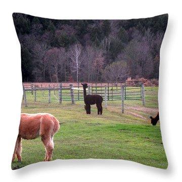 Moonacre Alpacas 5 Throw Pillow