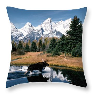 Moose & Beaver Pond Grand Teton Throw Pillow
