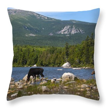 Moose Baxter State Park Maine Throw Pillow