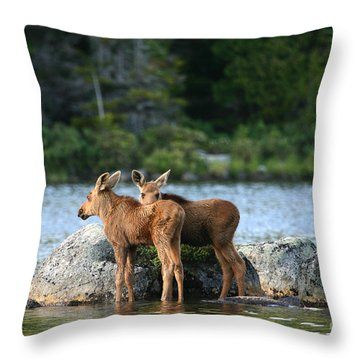 Moose Calves In Maine Throw Pillow by Jeannette Hunt