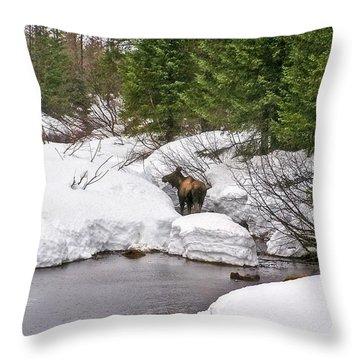 Moose In Alaska Throw Pillow