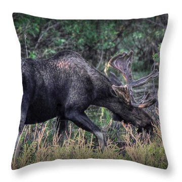 Moose In The Meadow Throw Pillow