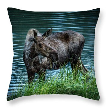 Moose In The Water Throw Pillow