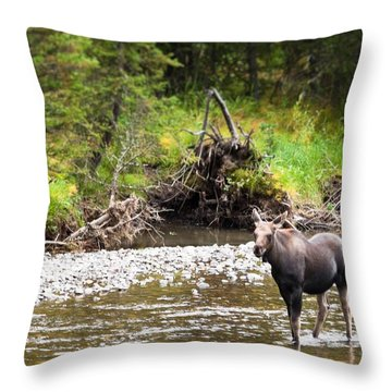 Moose In Yellowstone National Park   Throw Pillow