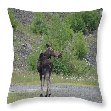 Throw Pillow featuring the photograph Moose by James Petersen