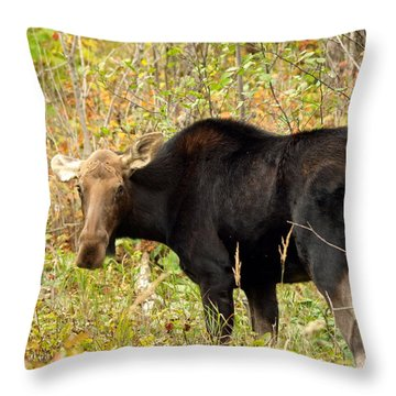 Throw Pillow featuring the photograph Moose by James Peterson