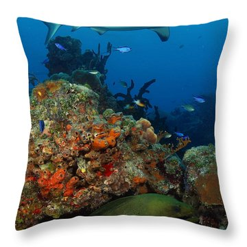 Moray Reef Throw Pillow by Carey Chen