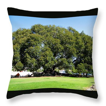 Moreton Fig Tree In Santa Barbara Throw Pillow