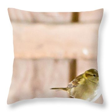 Throw Pillow featuring the photograph Morning Bird by Courtney Webster