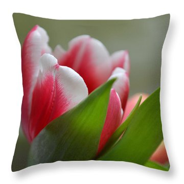 Morning Brilliance Throw Pillow by Felicia Tica