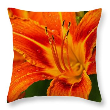 Throw Pillow featuring the photograph Morning Dew by Dave Files