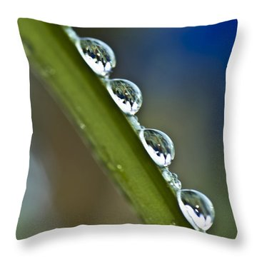 Morning Dew Drops 2 Throw Pillow by Heiko Koehrer-Wagner