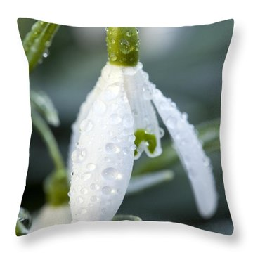 Morning Dew On Snowdrop Throw Pillow