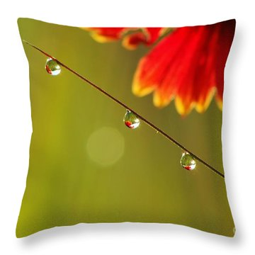 Morning Dew Throw Pillow by Patrick Shupert