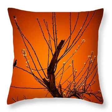 Morning Dove Sunrise Throw Pillow