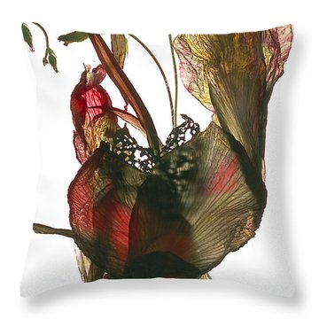 Designs Similar to Morning Glory Canna Heart