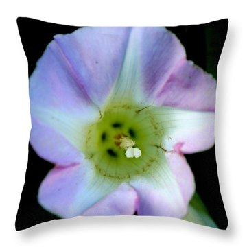 Morning Glory Floral Window Throw Pillow by Neal Eslinger