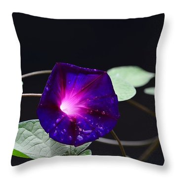 Morning Glory - Grandpa Ott's Throw Pillow