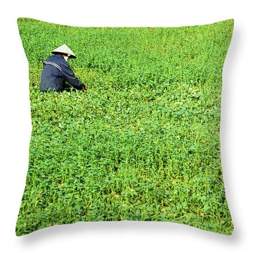 Morning Glory Throw Pillow by Rick Piper Photography