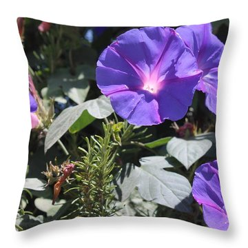 Throw Pillow featuring the photograph Morning Glory by Rosemary Colyer