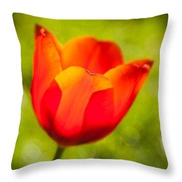 Morning Joy Throw Pillow by Davorin Mance