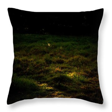 Throw Pillow featuring the photograph Morning Light Dew And Silk by Cassandra Buckley