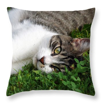 Morning Stretch Throw Pillow by Christina Rollo