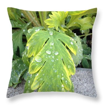 Throw Pillow featuring the photograph Mornings Dew by Margie Amberge