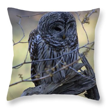 Mostly Awake Throw Pillow by Randy Bodkins