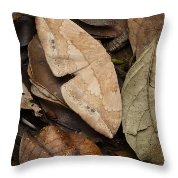 Moth Camouflaged Against Leaf Litter Throw Pillow