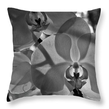 Throw Pillow featuring the photograph Moth Orchid Backlit by Ron White