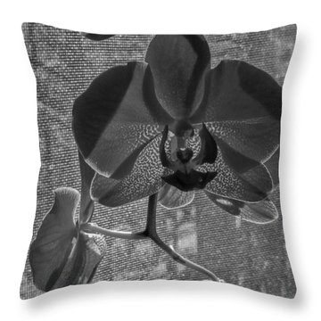 Throw Pillow featuring the photograph Moth Orchid In Window by Ron White