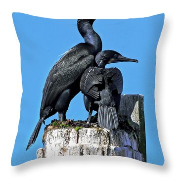 Throw Pillow featuring the photograph Mother And Baby Brandt's Cormorants by Susan Wiedmann