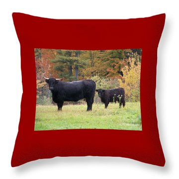 Throw Pillow featuring the photograph Highland Cattle  by Eunice Miller