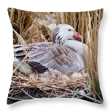 Throw Pillow featuring the photograph Mother's Day Goose by Anita Oakley