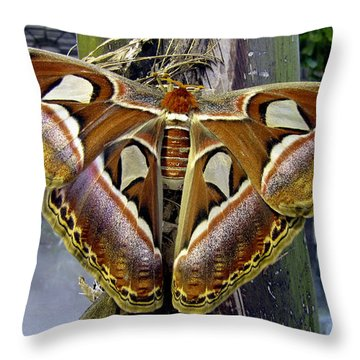 Atlas Moth Throw Pillow