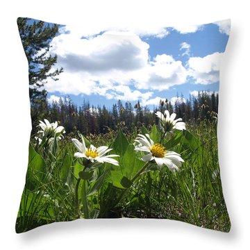Mountain Daisies Throw Pillow