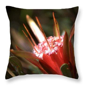 Throw Pillow featuring the photograph Mountain Devil by Miroslava Jurcik