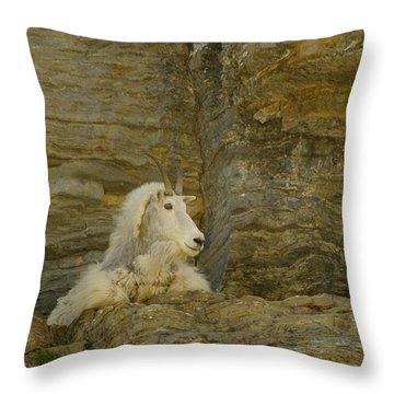 Mountain Goat Throw Pillow by Jeff Swan