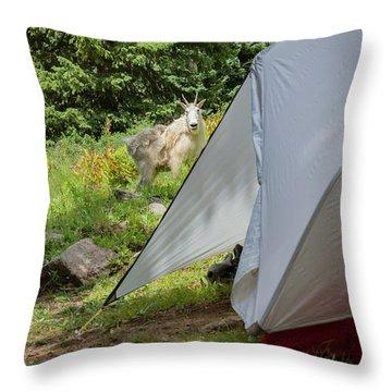 Mountain Goat Standing Near The Tent Throw Pillow