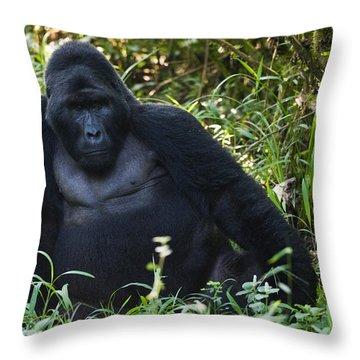 Mountain Gorilla Gorilla Beringei Throw Pillow